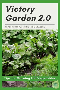Victory Garden 2.0 #FallisforPlanting Vegetables! Tips to grow your fall vegetables successfully! National Garden Bureau Fall Vegetables, Planting Vegetables, Planting Seeds, Vegetable Gardening, Organic Gardening, Gardening Tips, Fall Crops, Victory Garden, Fall Plants