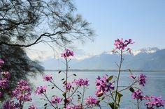 https://flic.kr/p/GF6r6h   Montreux - Suisse