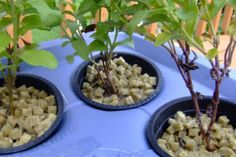 Requerimientos para un cultivo hidropónico