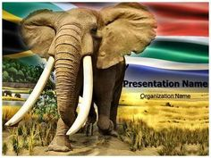 Download our state-of-the-art African #Elephant #PowerPoint #slides. These slides of African Elephant #PPT #template allow you to edit text and values on graphs or diagram representations. Download now to get started with your all important presentation!