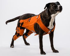 galia weiss's hipster harness rehabilitates dogs with hip dysplasia - designboom   architecture