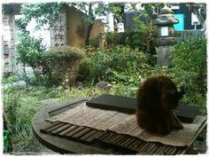 garden cat 猫 庭  秋の庭