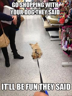 Fun Claw - Funny Cats, Funny Dogs, Funny Animals: Funny Pictures Of Dogs - 17 Pics