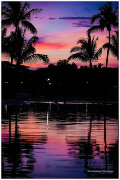 sunset purple red palms water reflection beautiful ♥♥♥♥