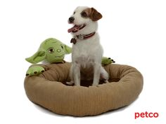 Petco's Star Wars Pet Fans Collection: For Sith Tzus, Jedi Javanese, and All Furry Companions | StarWars.com