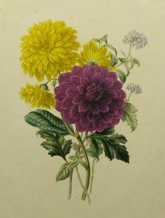 James Andrews    The Chrysanthemum    1830