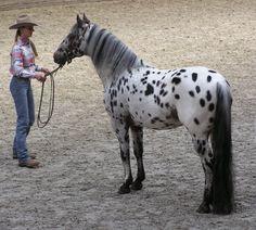 Appalossa...my favorite horse