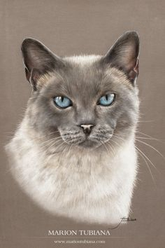 © Marion Tubiana   Animal Pastels | Pastels animaliers et équins - Photographies - Peintures Pastel Drawing, Pastel Art, Cat Drawing, Animal Paintings, Animal Drawings, Siamese Cats, Cats And Kittens, Color Pencil Art, Beautiful Cats