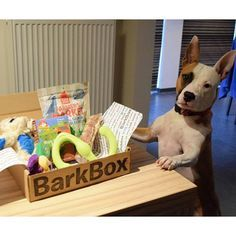 """4TH OF JULY SPAWCIAL: Start a 6 or 12 month BarkBox subscription and score a free pupgrade for an extra premium toy in each month's box ($54 or $108 value). Click through this pin and select """"yes, please!"""" for Pupgrade at checkout. BarkBox delivers a monthly themed box of curated all-natural doggy treats and fun toys to your door. Plans can be customized for big or small dogs, heavy chewers, and pups with allergies. Most of all, it just makes dogs happy."""