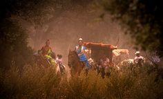horses and flamenco - Google zoeken