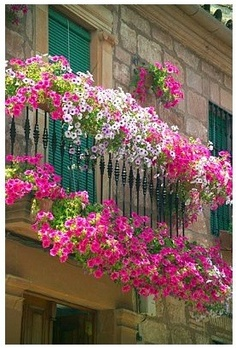 Love pink flower boxes