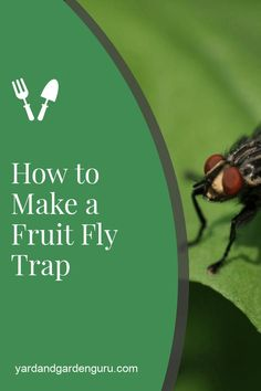 Do you have fruit trees? Fruit fly can be a real problem so here is how make a homemade fruit fly trap and keeps these pests away.