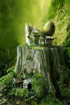 Fairy house in a tree stump