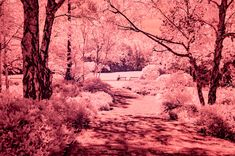 red sunday #kurparkoberlaa #vienna #wien #infrared #infrarot #red #rot #summer #sommer #bench #trees Vienna, Grand Canyon, Bench, Sunday, Trees, Nature, Summer, Pictures, Outdoor