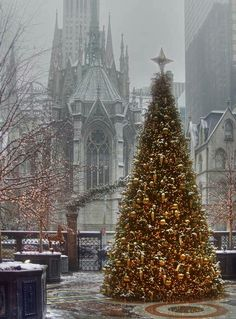 The New York Palace hotel's Christmas tree, standing in the courtyard by St Patrick's Cathedral