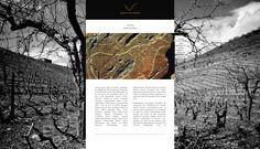 Visual Kitchen - Communication Agency