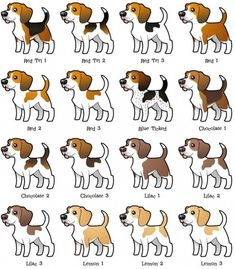 Beagle coloring variations.
