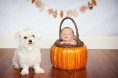 Newborn baby portrait with fall accents and small white dog by Alissa Aryn Photography | Two Bright Lights :: Blog