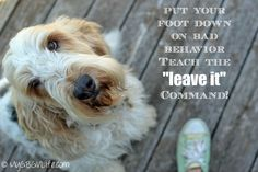 "How To Teach Your Dog To ""Leave It"" 