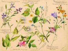 Wild Flowers 2 - 70x50cm