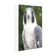 Peregrine Falcon Photo Mini Binder - animal gift ideas animals and pets diy customize