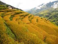 WWOOFING NEPAL