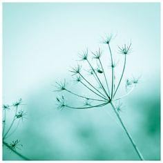Teal Green Nature Photo  8x8 Fine Art Print by EvgeniyaMaslakova, $15.00