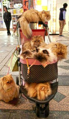 Bon voyage..the cat lady takes a trip... : )