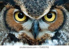 Imágenes, fotos de stock y vectores sobre Owl | Shutterstock