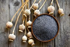 Mak siaty: Rastlina s nádhernými kvetmi, ktoré lákajú aj hmyz Fertility Spells, Non Comedogenic Oils, Black Mustard Seeds, Formula Cans, Aromatherapy Candles, Fennel Seeds, Facial Oil, Hair Oil, Poppies