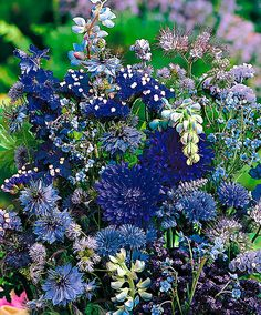 Vetőszőnyeg -virágágyásba kék