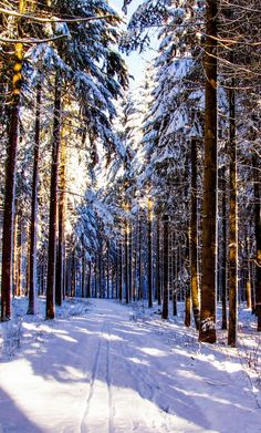 Path in the snowy forest (Luxembourg) by San M. Photography