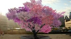 Growing 40 types of fruit on one tree Sam Van Aken created the Tree of 40 Fruit by grafting buds from various stone fruit trees onto the branches of a single tree, making it capable of producing multiple types of fruit. This is an artist rendering of what
