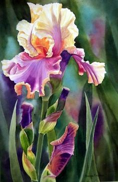 Shop for iris art from the world's greatest living artists. All iris artwork ships within 48 hours and includes a money-back guarantee. Choose your favorite iris designs and purchase them as wall art, home decor, phone cases, tote bags, and more! Art Floral, Floral Prints, Iris Flowers, Beautiful Flowers, Watercolor Flowers, Watercolor Paintings, Watercolors, Iris Painting, Illustration Blume