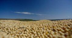 Brasil exporta cerca de 112 trilhões de litros de água doce por ano - Atuação no mercado de commodities coloca em pauta a exportação indireta de recursos hídricos - O Globo