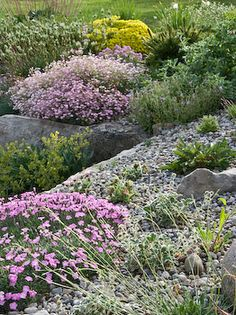 http://www.flower-gardening-made-easy.com/image-files/alpine-garden.jpg