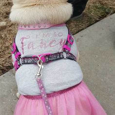 I'm so fancy ! Pugshion 🙄