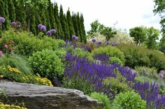 Hillside gardening - Think Mediterranean. Many plants of Mediterranean origin make perfect candidates for growing on sunny, dry, rocky slopes. Rosemary (Rosemary officinalis, zones 8 to 10), lavender (Lavendula spp, zones 5 to 9) and sage (salvia spp and cvs, zones 5 to 9) are all good choices.