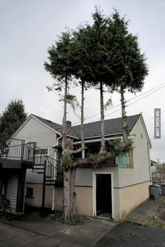 Trees on a tree. Are you drunk, tree?