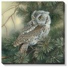 screech-owl-wrapped-canvas-art-by-rosemary-millette-f593695430d.jpg 135×135 pixels