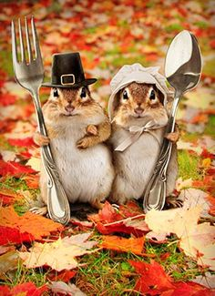 Happy Thanksgiving to everyone :) They just reminded me of your creative mind. : ) The story of the chipmunks' thanksgiving. Tierischer Humor, Funny Animals, Cute Animals, Baby Animals, Tier Fotos, Thanksgiving Cards, Thanksgiving Pictures, Thanksgiving Blessings, Happy Thanksgiving Memes