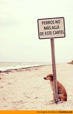 Perros no, más allá de este cartel