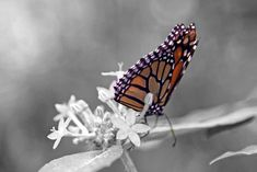 black and white with color - Google Search