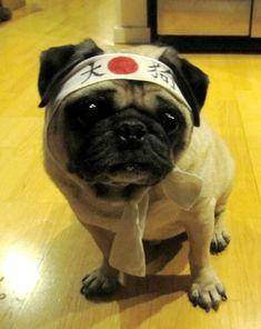 Martial Art Puggie