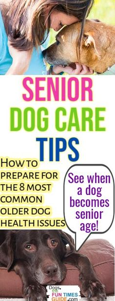 """Home Remedies For Senior Dog Health Care Issues - See the 8 most common older dog health issues and what you can do to prevent & treat them. Do this now to help your dog live a long and healthy life. PLUS... see what is classified as """"dog senior age"""" these days!"""