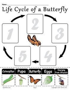 Free Printable Worksheets, Kindergarten Worksheets, Printables, Kindergarten Science, Preschool Activities, Life Cycle Craft, Cycle Of Life, Butterfly Life Cycle, Life Cycles