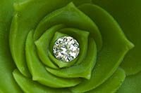 earring in center of plant