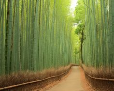 Bamboo Path, Kyoto, Japan Breathtaking Magical Tunnels Around The World - Always in Trend | Always in Trend