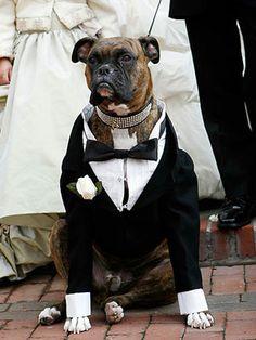A Dressed-to-Impress Wedding Dog
