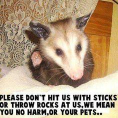 Love my opossums
